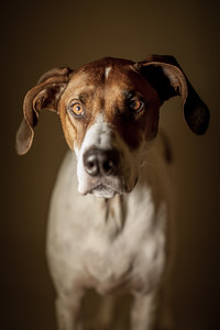 Katy Ann Photography Jasper hound dog Jeremy Klaas 143