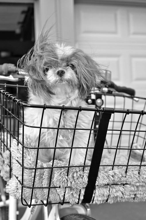Jolene's Pet Portraits