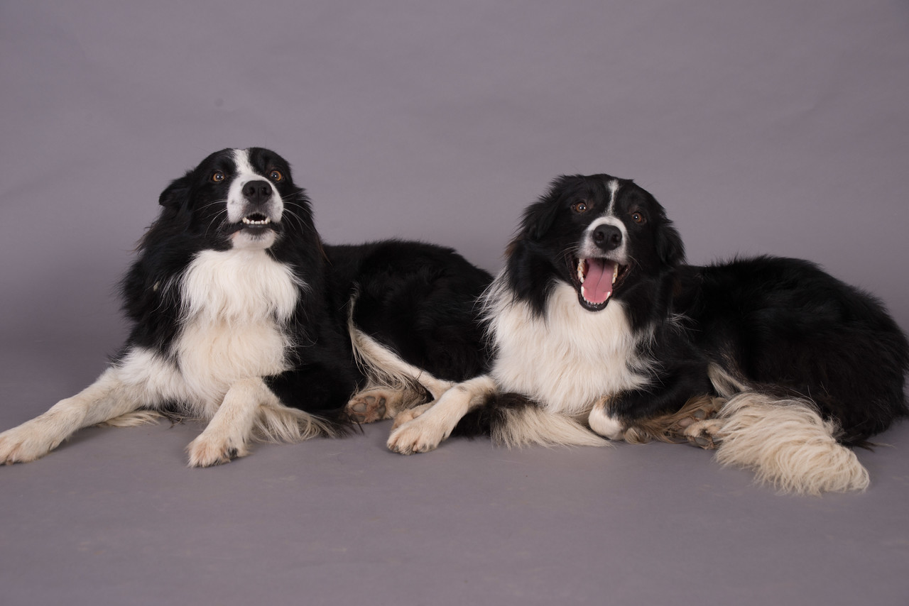 Kevins Dogs-133