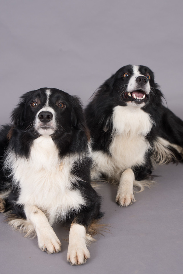 Kevins Dogs-129