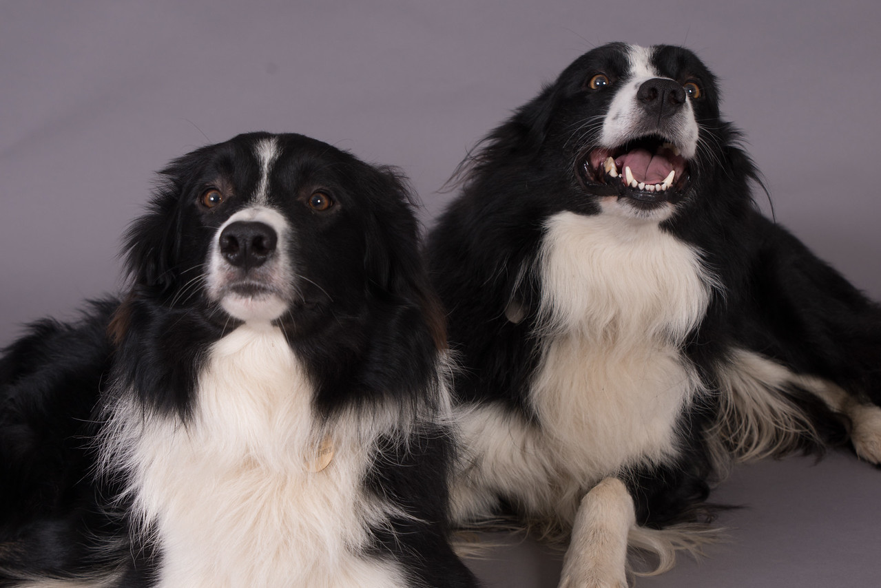 Kevins Dogs-131