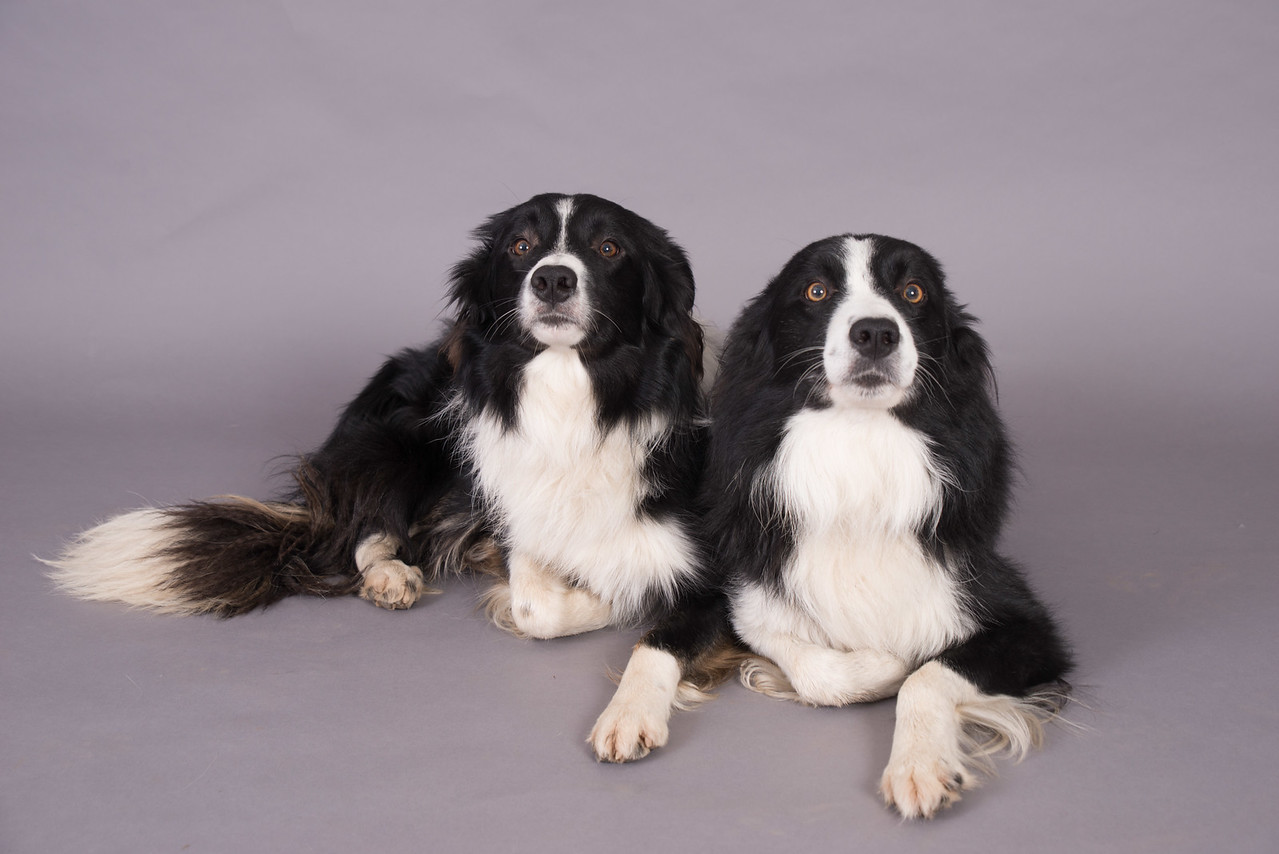 Kevins Dogs-112