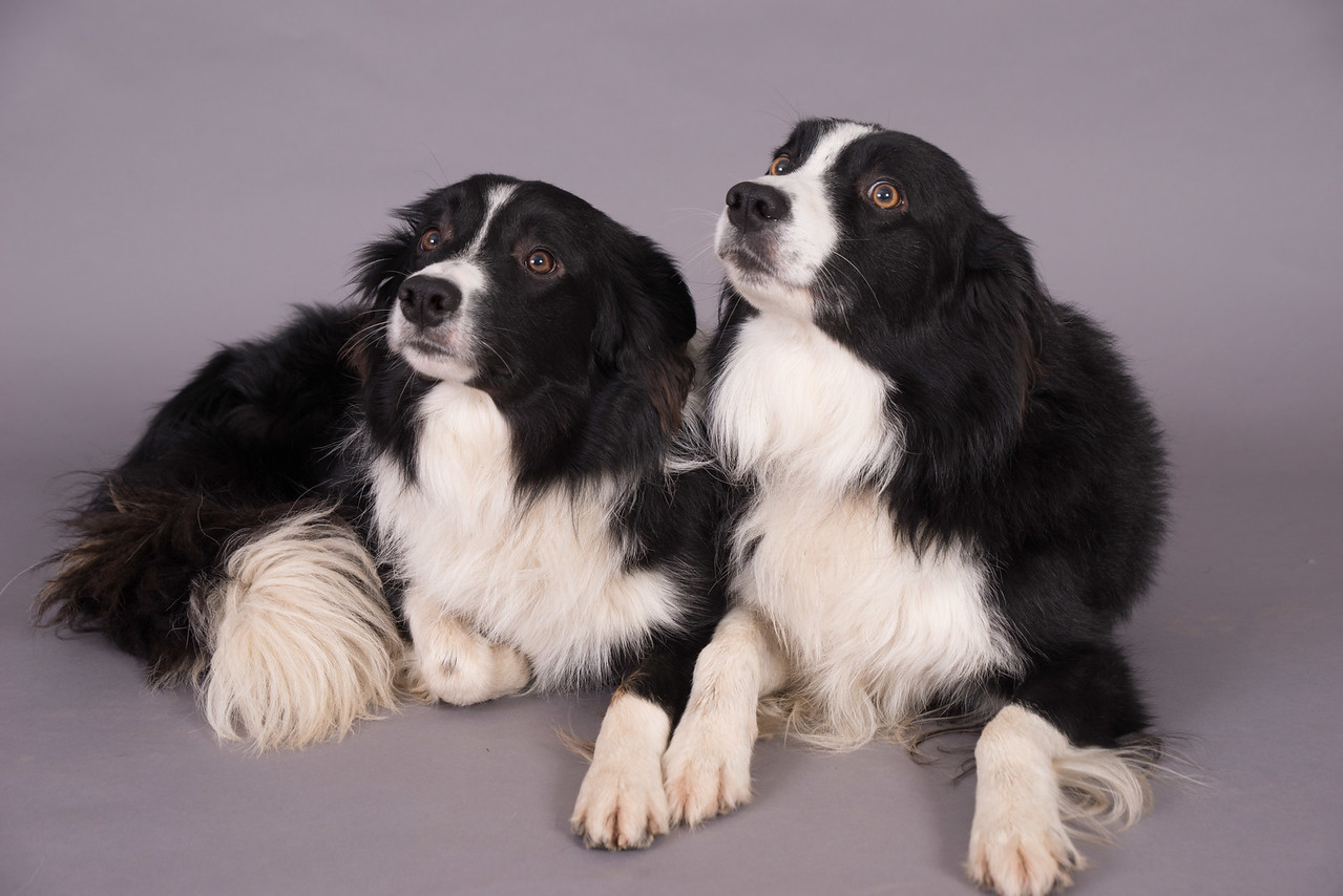 Kevins Dogs-110