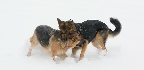 Kodak and Izzy, February 21, 2015