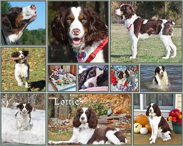 lottie collage5 copy