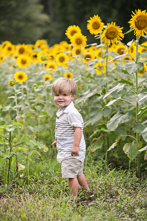 Marlowe - Sunflowers