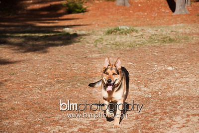 Kathleen-Buddy-Maternity-2954_03-18-16  by Brianna Morrissey  ©BLM Photography 2016