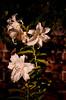 Lindsey Andrew Wedding-FMK_2650