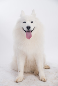 Mishka Cloud Dog-108