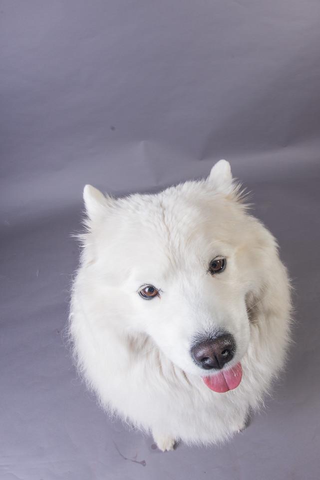 Snow Dog Photos 2017-205