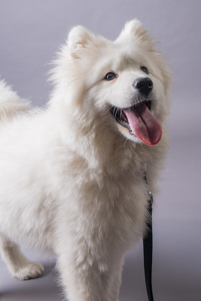 Snow Dog Photos 2017-103