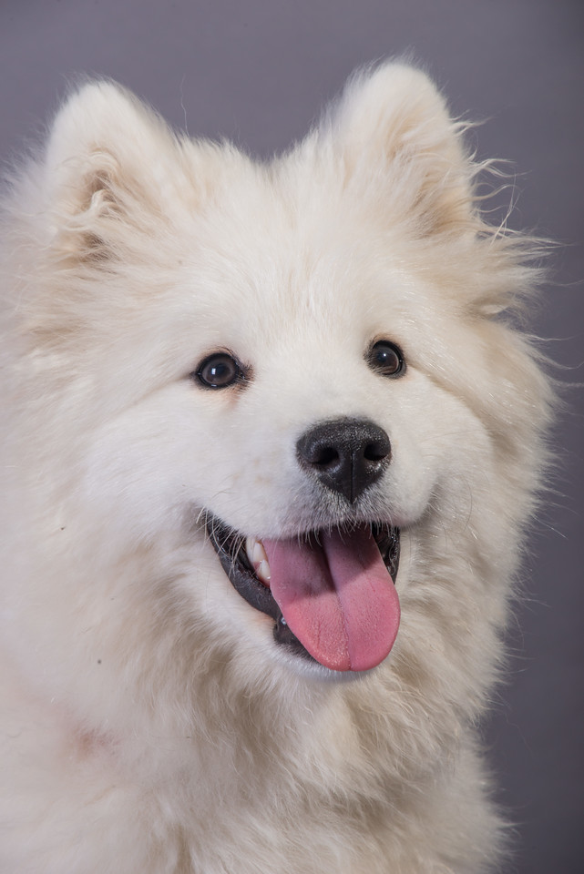 Snow Dog Photos 2017-169