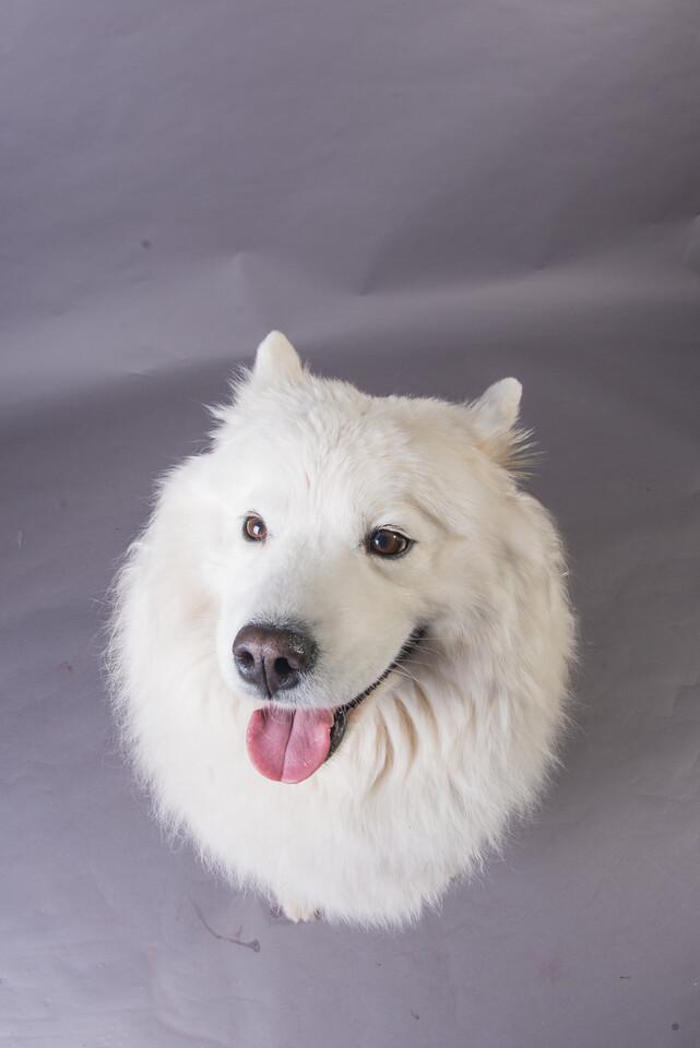 Snow Dog Photos 2017-203