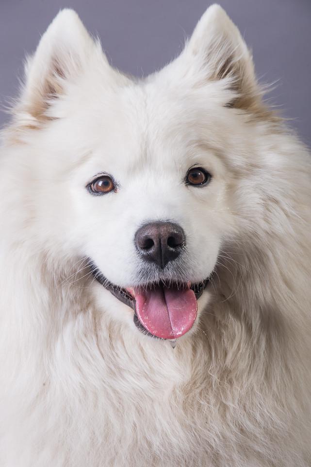 Snow Dog Photos 2017-181