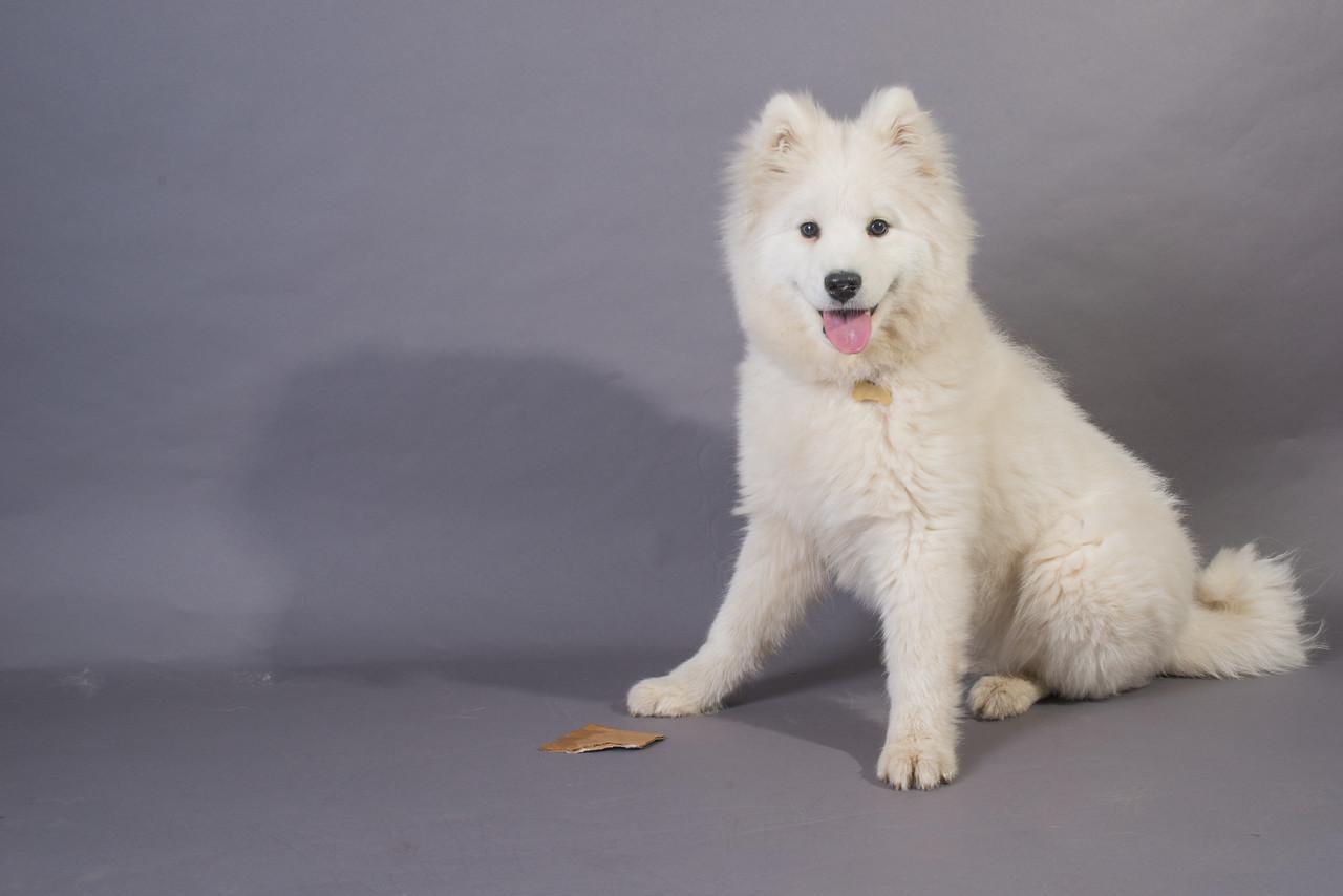 Snow Dog Photos 2017-242
