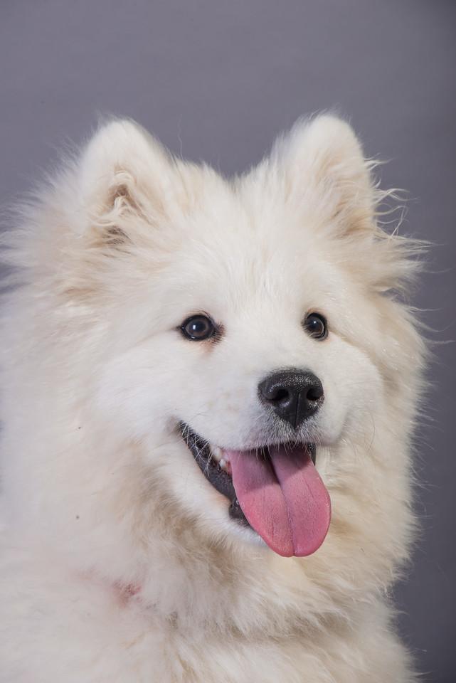 Snow Dog Photos 2017-163