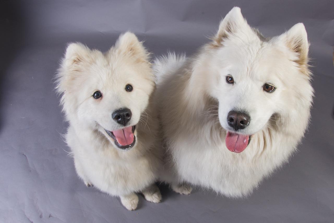 Snow Dog Photos 2017-211