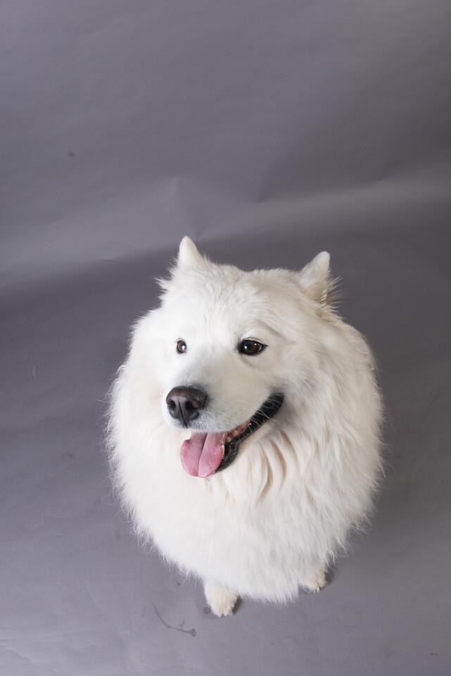 Snow Dog Photos 2017-202