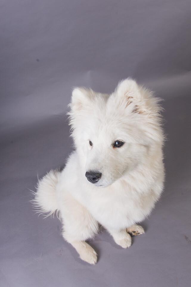 Snow Dog Photos 2017-199