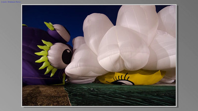 """This is a series of photographs taken of the balloon Miss Daisy at the Balloons Over Paradise balloon festival in Immokalee, Florida.  The process of blowing up this huge balloon is a long one.  """"Miss Daisy is 100 feet tall and weighs in excess of 1,000 pounds and has more than 200,000 cubic feet of petal power! Her charming smile can be viewed from both sides with one side winking at her admirers!  Miss Daisy has been voted Favorite Special Shape in St. John Rechalla, Canada and recognized as favorite Shape by Mayor of Guatteau, Ontario. She has flown in France, New Zealand, Canada and all over the United States. And...of course, her southern charm makes her one of S.C.'s most beloved residents!""""    Next to Miss Daisy is the Flying Purple People Eater, a jolly monster with long legs and neon claws.  At one point they seem to be eye to eye, saying, """"Good morning, you're up early this morning too!""""  (The music is Waltz of the Flowers from The Nutcracker.)"""
