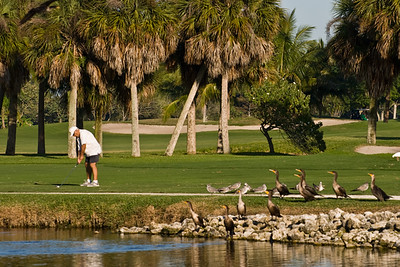 Golfing and gallery at Naples Beach Hotel