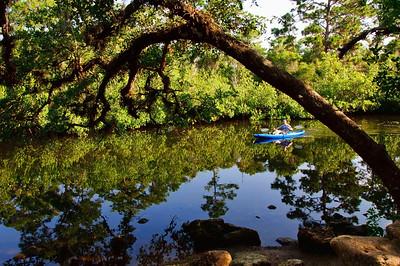 Estero river running along Koreshan St. Park., kayak rental