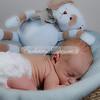 2013-Preston-newborn-43