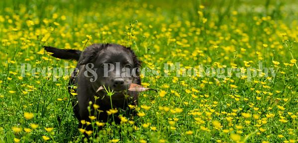 Pet Photography-Nietche and Cowboy