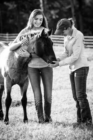 10 7 20 Stac Horses d 257 bw
