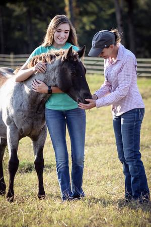 10 7 20 Stac Horses d 257