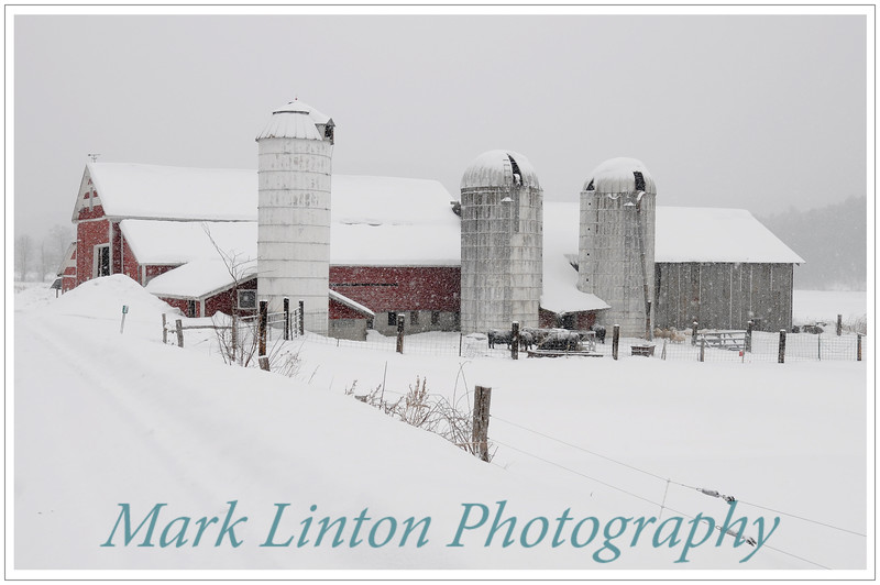 Mark Linton Photography