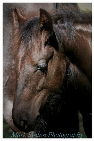 Mark Linton Photography
