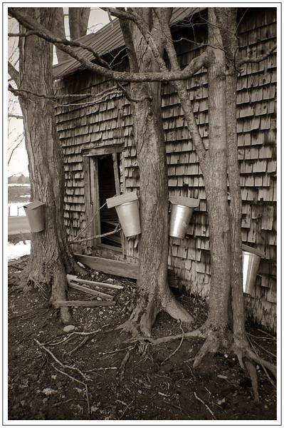 Trees bordered