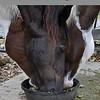 3 horses2