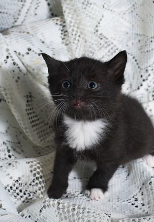 IMG#0212 Confused Kitten
