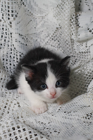 Img#0124 Shy Kitten