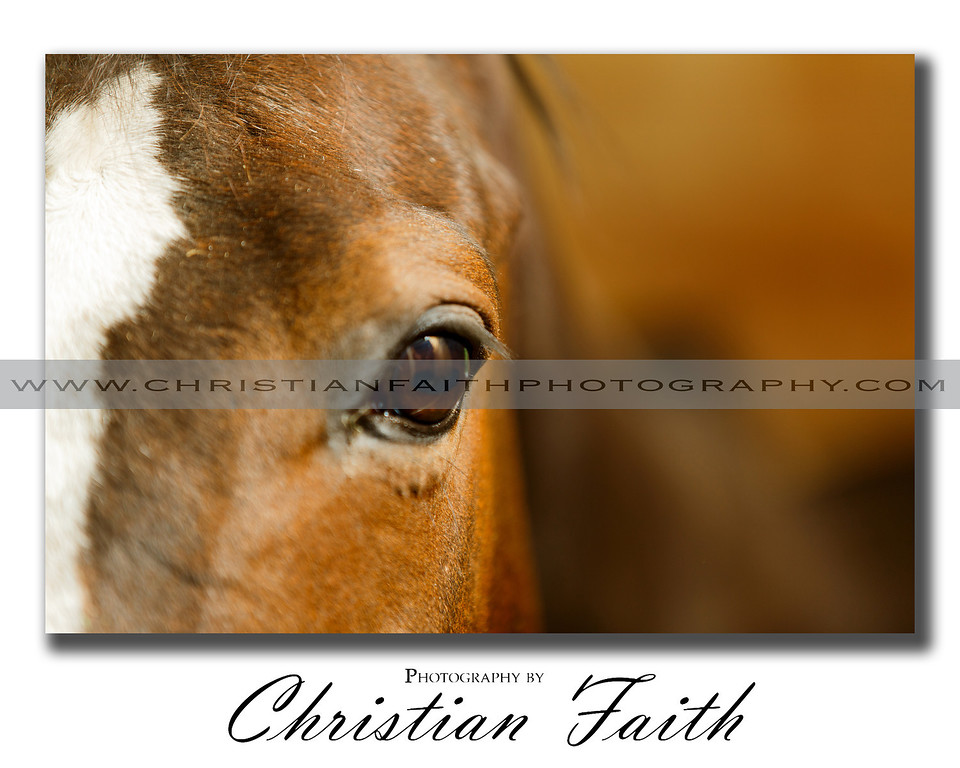 """""""Through The Eye of a Horse""""<br /> <br /> This Elite Series Print comes in limited sizes.<br /> It is also available for download."""