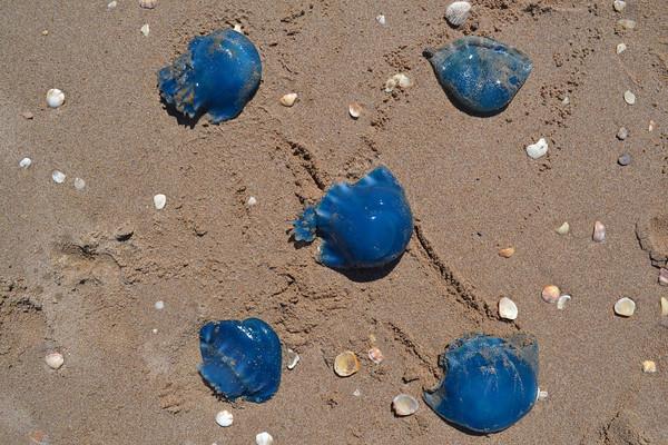 Jelly Fish form Kino Bay