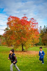 Auckland Botanical Gardens, 2014.
