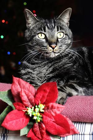 Pet Photography-Caesar