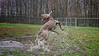 Grayce the Flying Weim :