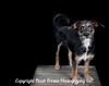 Laurens Pups Final 11x14-