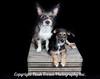 Laurens Pups Final 11x14-0485