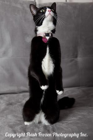 Panda-1309