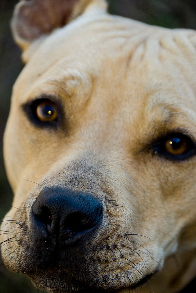 Doggie_1