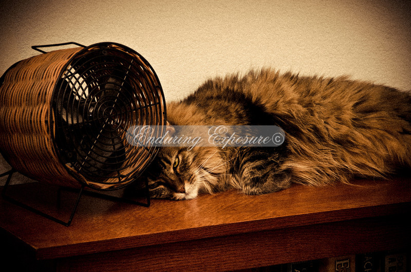 Mowgli was lounging by the fan (his favorite spot), even though it wasn't on.