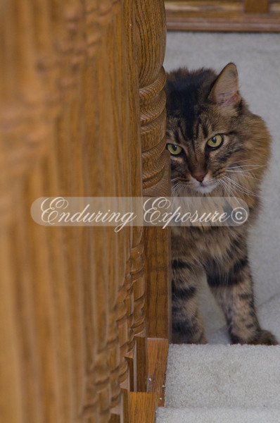 Mowgli was peeking around the corner of the banister, keeping an eye on us.
