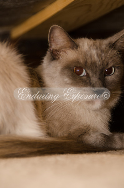 Lying on my side, flash setup remotely, zoom lens mounted, I had to get tricky to capture Momma Sophy's pictures