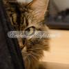 Mowgli begins a game of peek-a-boo