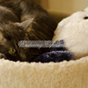 Tabitha cuddling with her puppy dog pillow
